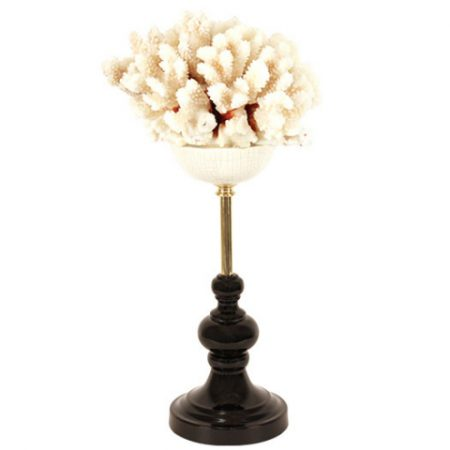 White Coral Tree